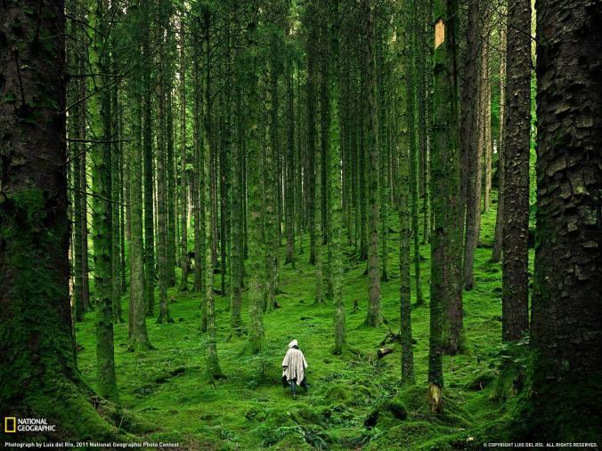 Image result for spiritual redwood  gif
